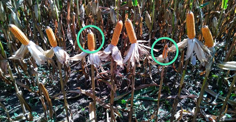 Como a plantadeira afeta a plantabilidade.png