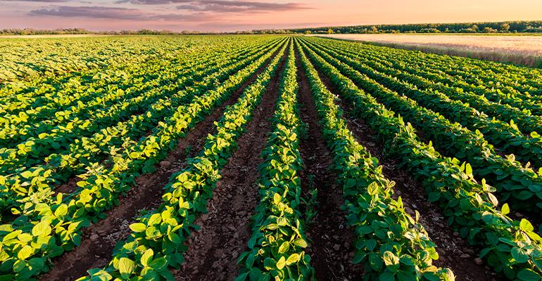 Como a tecnologia pode melhorar a sua plantabilidade.png