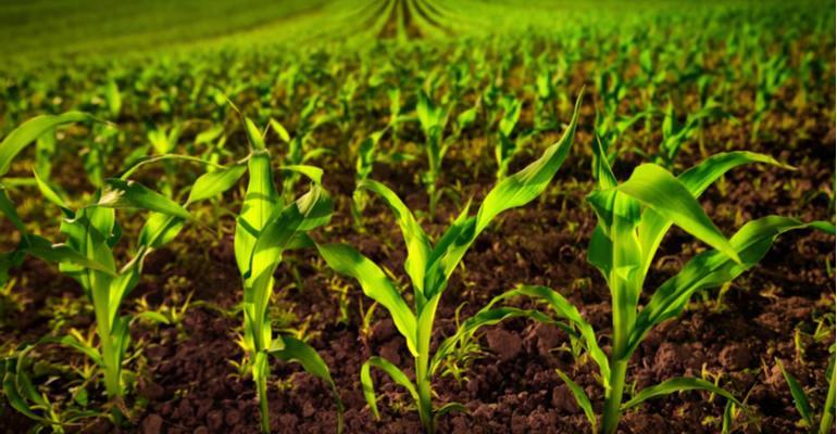 Oportunidades do mercado de fertilizantes potssicos ps pandemia.jpg