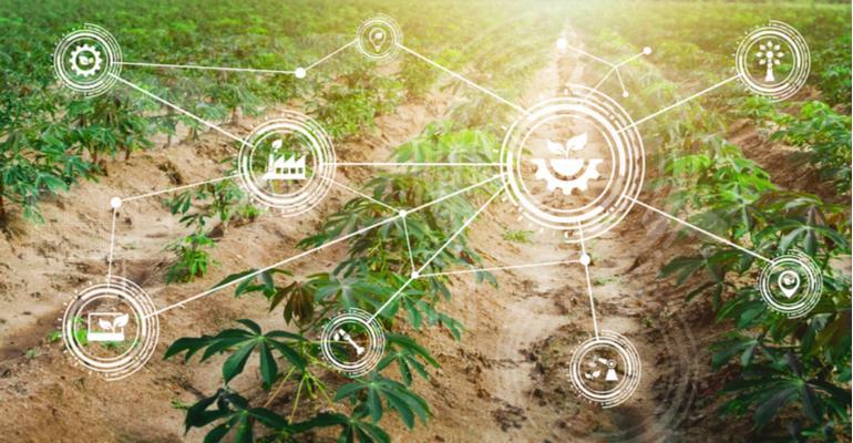 Quais os principais desafios da conectividade para o agro.jpg
