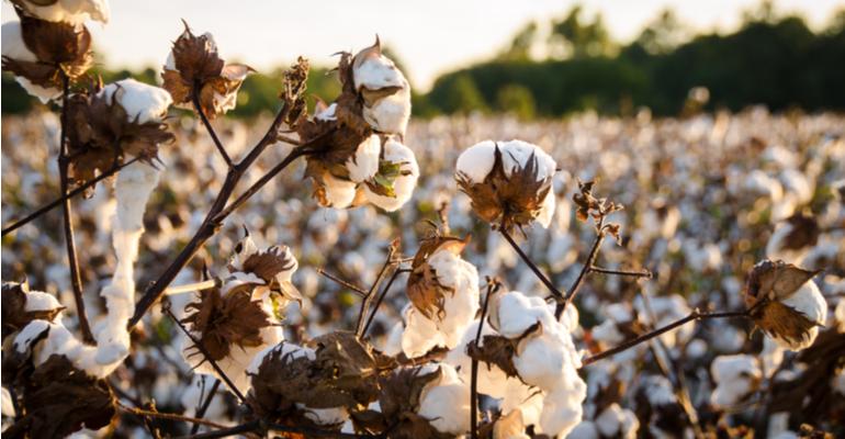 Retomada de demanda no mercado incentiva cultivo de algodão .png