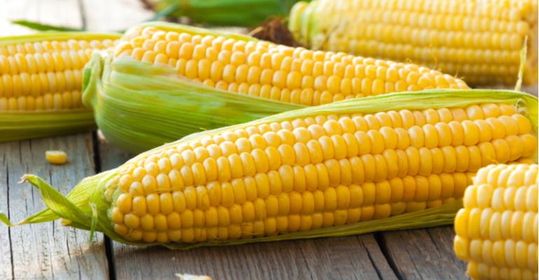 Safrinha do milho é fonte de renda extra para produtores.png