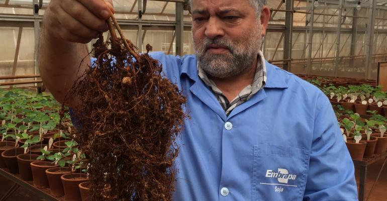 Especialista lista as melhores formas de controle de nematoides