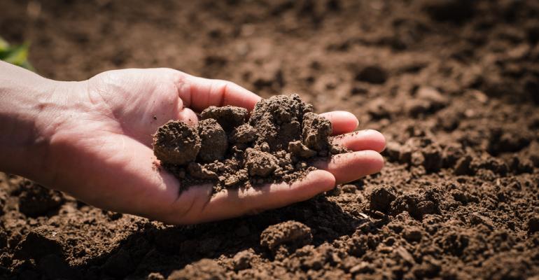 Agricultura sintrópica pode ser alternativa para a preservação do solo no futuro; entenda