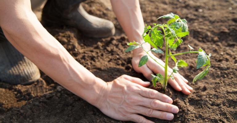 Conheça os principais pontos da nova cartilha da ONU para práticas sustentáveis na agricultura