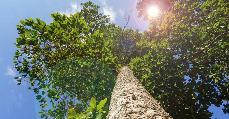 recomposição florestal