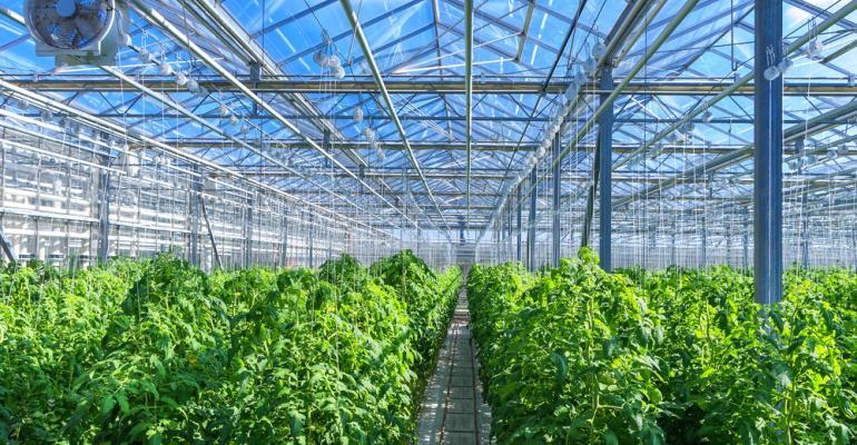 Inovações tecnológicas no plantio de tomate: a busca de eficiência para conseguir mercado
