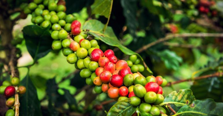 Tecnologias de secagem de grãos de café dispensam movimentação de grãos e reduzem custos