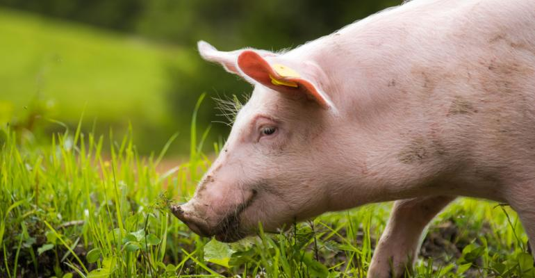 """Sistema de """"compartimentação de suínos"""": Por que ele garantirá maior segurança à suinocultura brasileira?"""