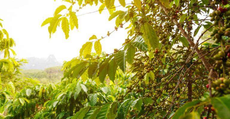 Entenda por que moderação é palavra-chave quando o assunto é irrigação no cafezal