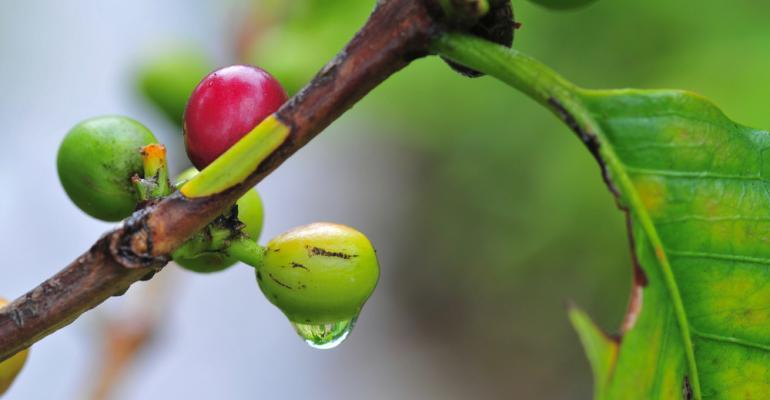 Você sabe que tipo de irrigação utilizar para melhorar a produtividade de café?