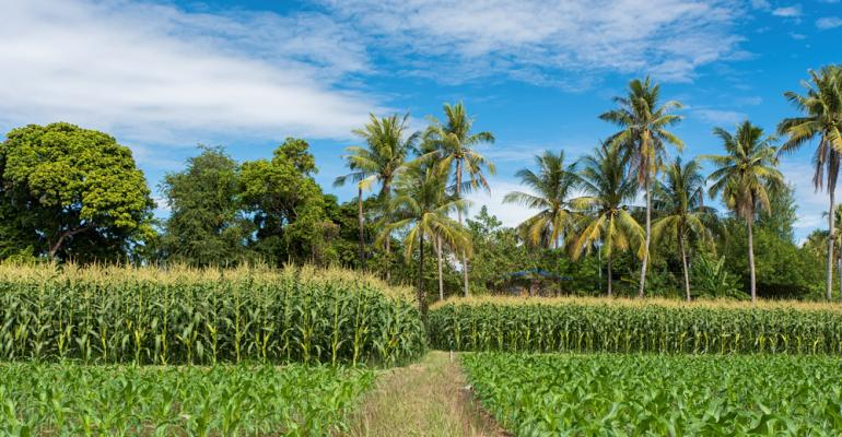 Cultivo consorciado pode aumentar a renda de pequenos produtores