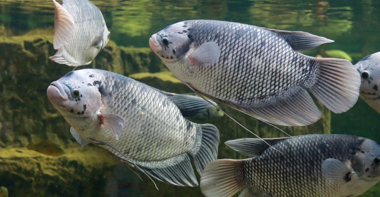Impactos do frio na piscicultura: você está preparado?