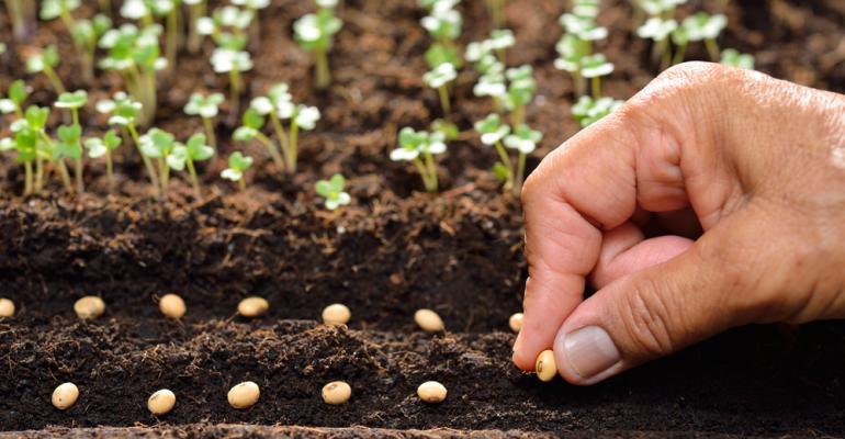Por que investir em sementes de alto valor?