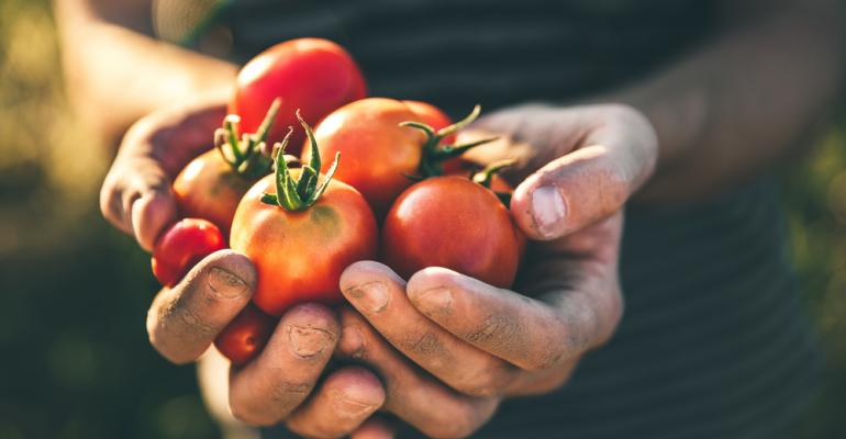 Mais tomates limpos com menos água. Saiba como reduzir perdas!