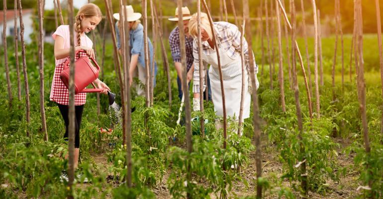 Agricultor familiar, entenda como inovações tecnológicas podem te ajudar