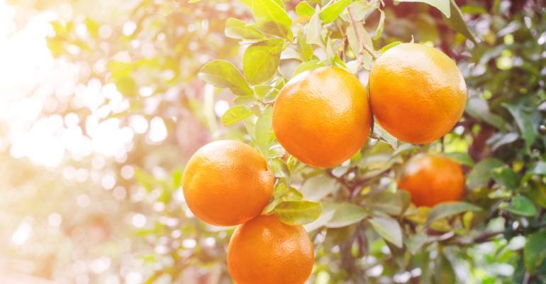 Proteja sua produção de citros de greening usando bioinseticida