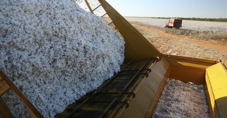 Big Data melhora o desempenho produtivo do algodão
