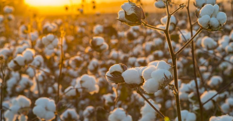 Todos os tipos de irrigação são indicados para o algodoeiro?