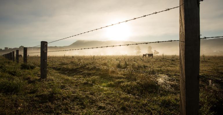 A estiagem chegou! Como promover a proteção do gado?