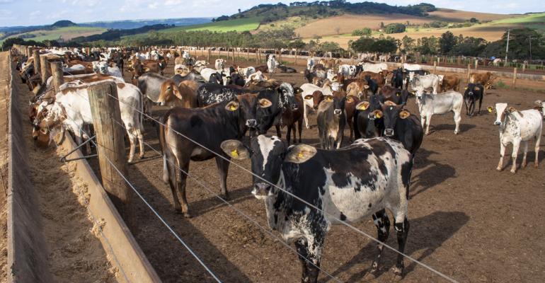 Confinamento de gado: pesquisador mostra como não errar