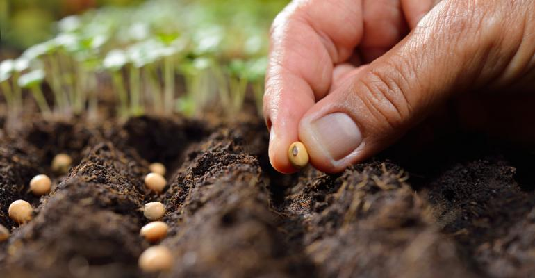As 10 principais vantagens do tratamento de sementes com elétrons