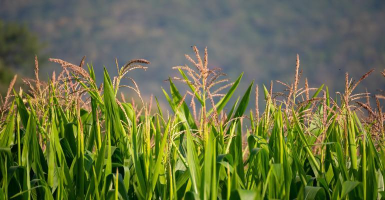 Quais os cultivos mais comuns na rotação de culturas?