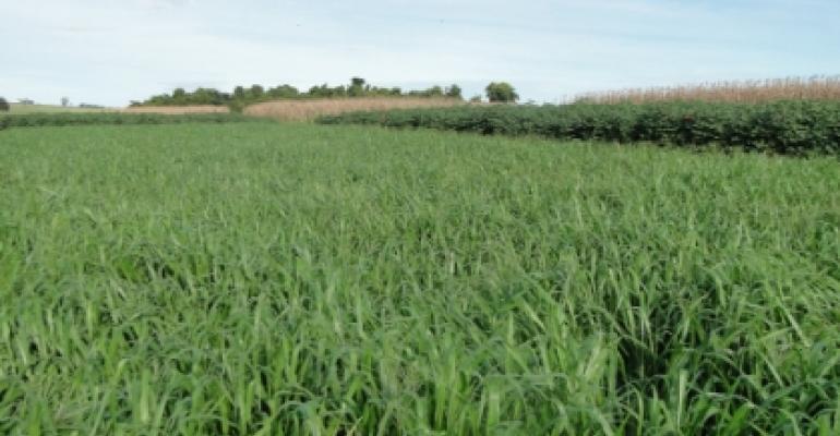 Cultivo de plantas de cobertura para os sistemas de produção no Cerrado