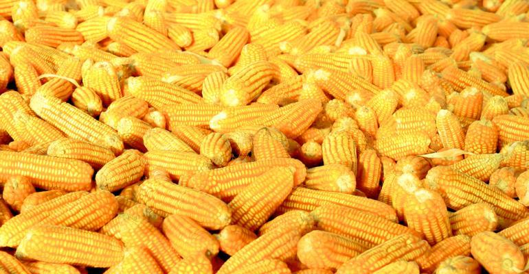 Segunda safra do milho vem boas expectativas