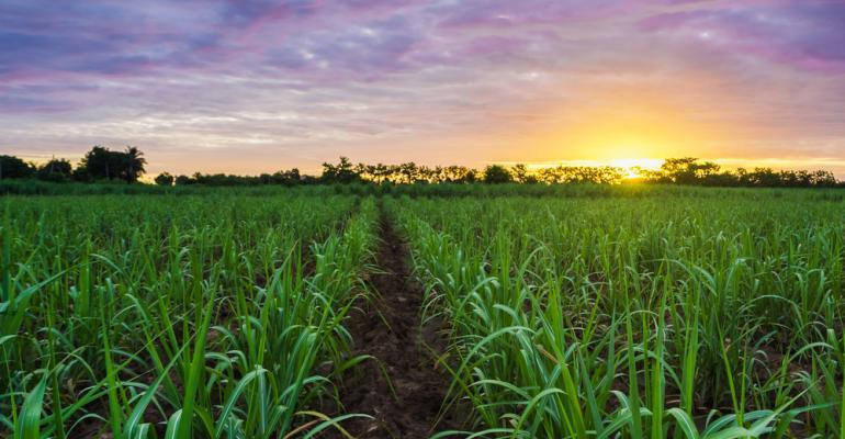 Linhas simples e duplo alternado: benefícios e limitações no plantio de cana
