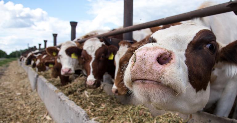 Nutrição de gado com precisão? Sim, você pode aproveitar essa tendência