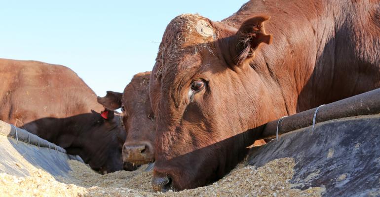 Suplementação nutricional para ruminante impulsiona pecuária de corte e leite. Saiba mais!