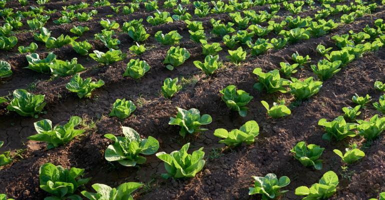 Em busca de soluções para horticultura? A Agrishow 2019 tem!
