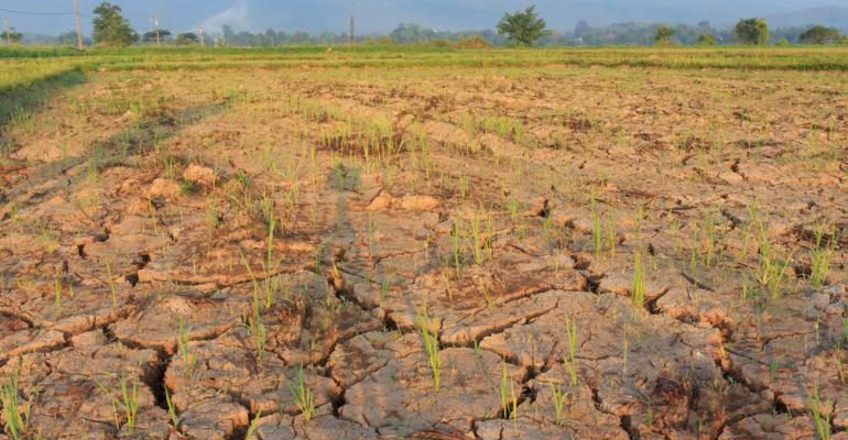 Como se preparar para o impacto do El Niño na agropecuária?