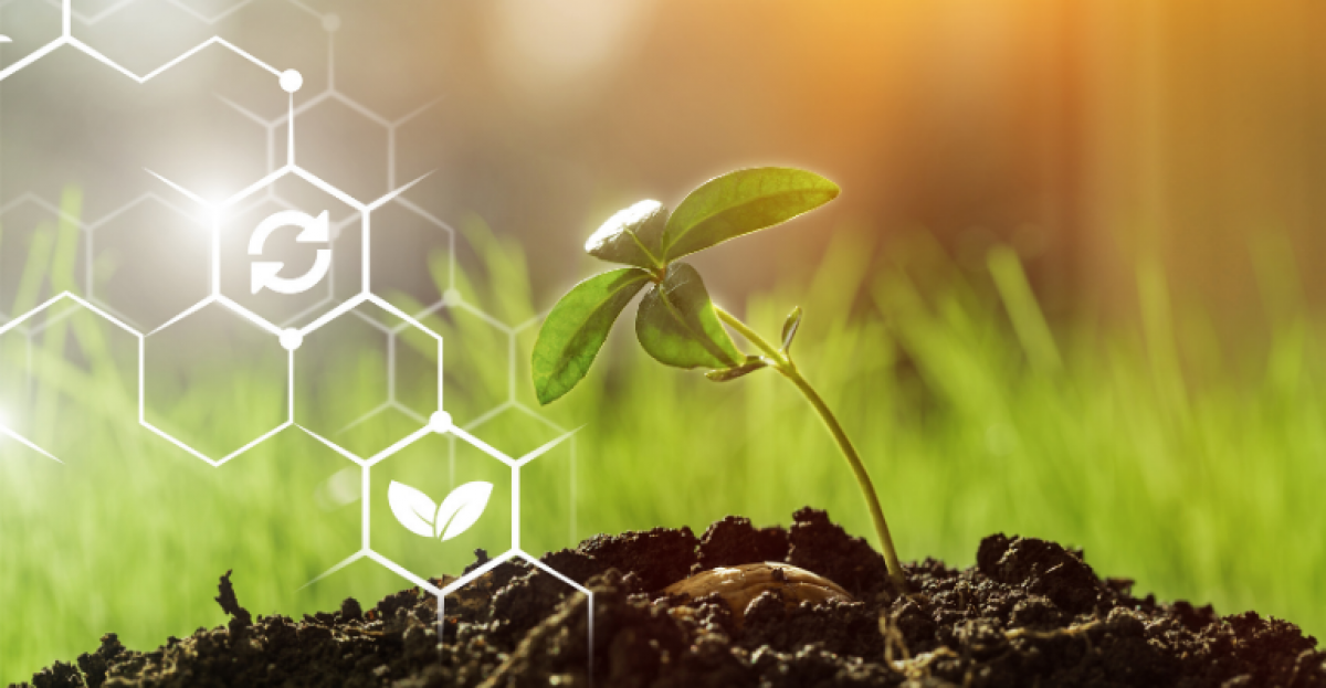 E-commerce e transformação digital: grandes aliados do agronegócio