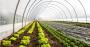 30% mais produtividade com plantio em estufa com alta tecnologia.png