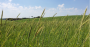 Agricultura de conservação o que é e por que aplicar.png