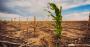 Alterações climáticas e seus efeitos jurídicos no agronegócio .png