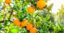 Brasil tem primeira fazenda de cítricos 100% monitorada por sensores inteligentes .png