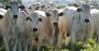 Inovação permite rastreabilidade da cadeia produtiva agropecuária (2).png