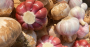 Novas tecnologias vão aumentar produtividade do alho brasileiro.png