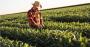 O que você precisa saber sobre o manejo sustentável da soja.png