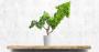 Produtores rurais ampliam investimentos em sustentabilidade.png
