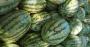 Rica em água e fonte de carboidratos, melancia é terceira fruta mais produzida no Brasil.png