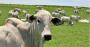 Sua fazenda de pecuária mais saudável em 3 passos.png