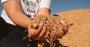 Tão antigo quanto a civilização, arroz alimenta mais da metade da população mundial.png