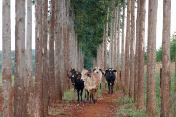Conheça os benefícios da ILPF para a conservação do solo