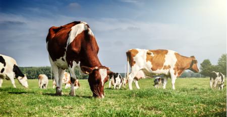 Já ouviu falar de descarbonização da produção de leite.png