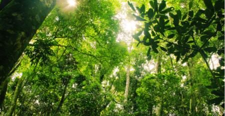 Política Nacional de Pagamento por Serviços Ambientais .png