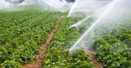 Você conhece as principais causas do desperdício na irrigação?